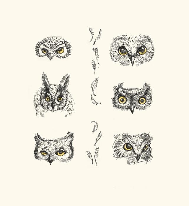 dominiqueChirinciuc_owls