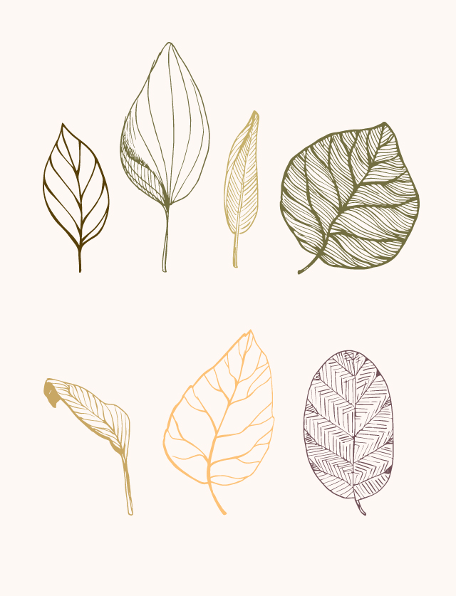 dominiquechirinciuc_leaves_illustration4