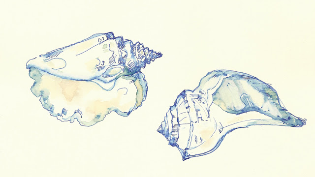 dominiquechirinciuc_drawing_shells_ink