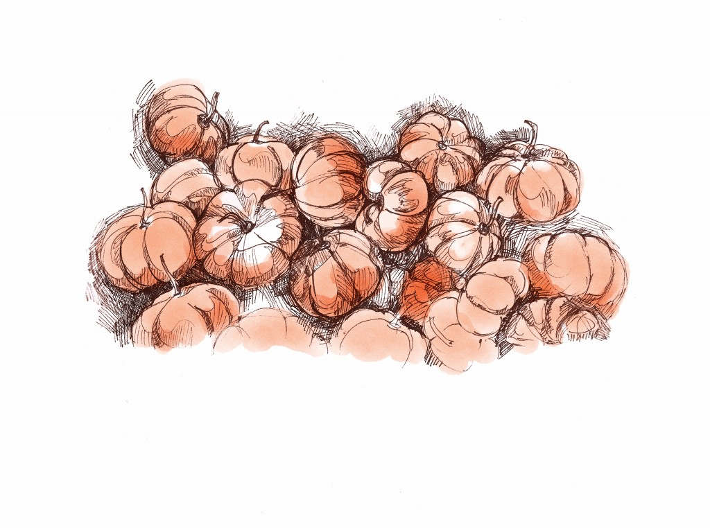 dominiquechirinciuc_pumpkins